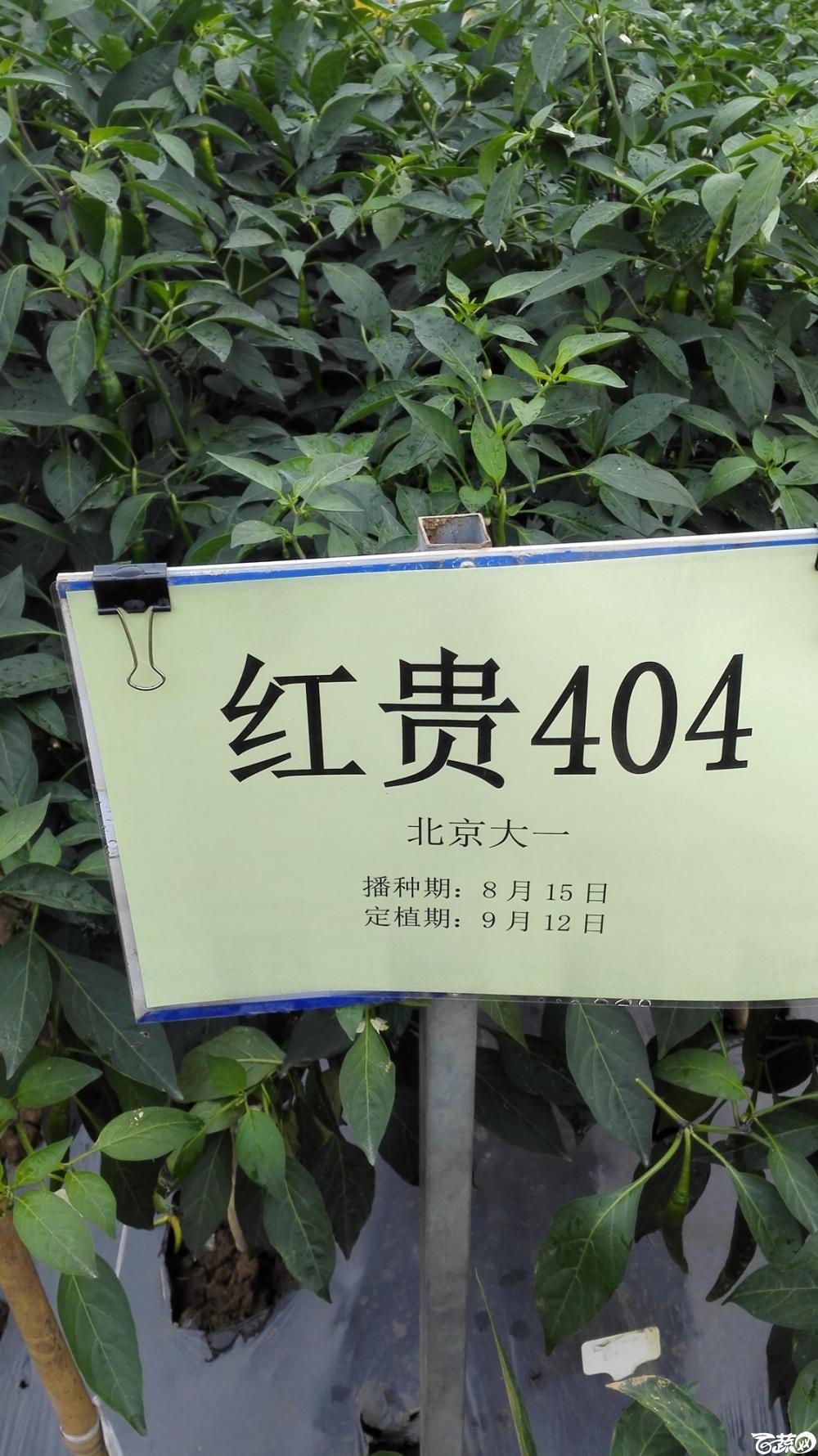 2014年12月8号中山蔬菜新品种展示会_辣椒_019.jpg