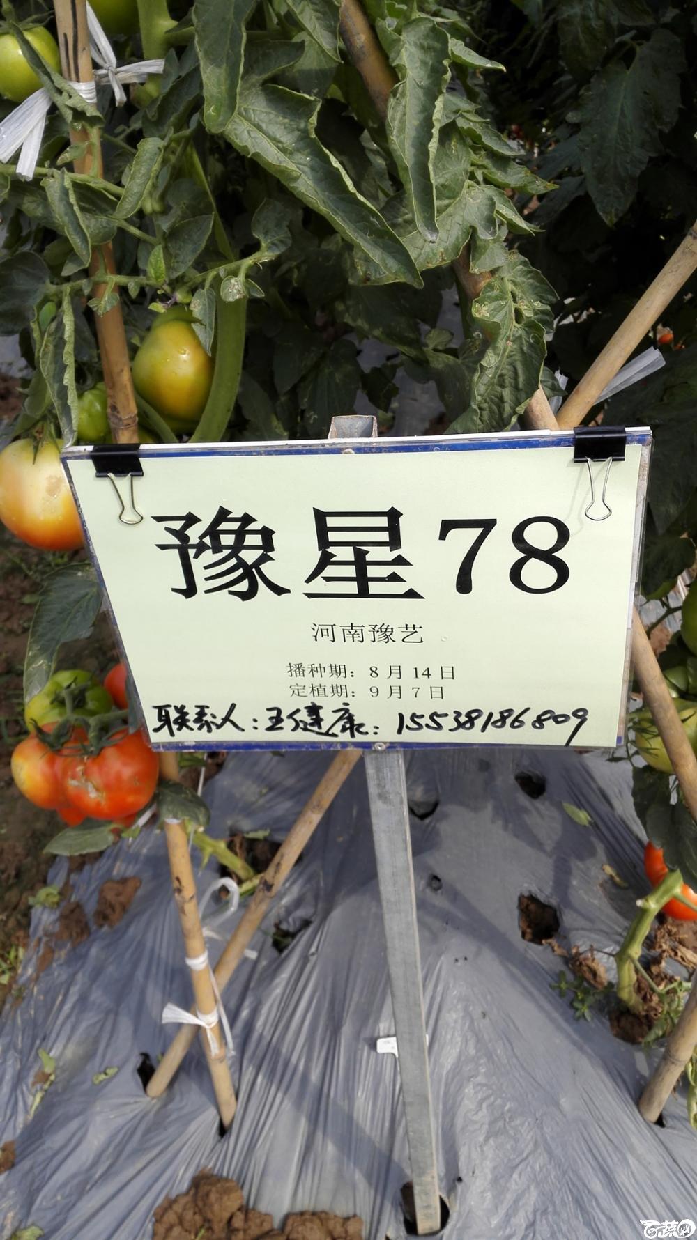 2014年12月8号中山蔬菜新品种展示会_番茄_023.jpg