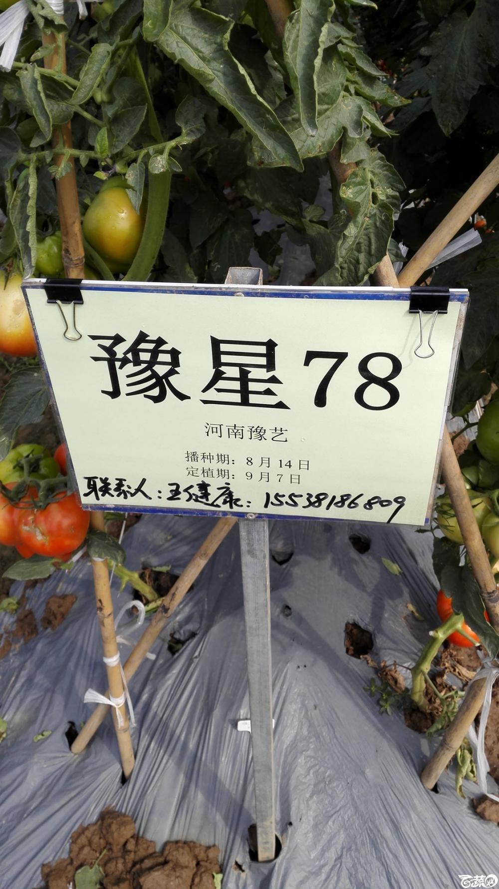 2014年12月8号中山蔬菜新品种展示会_番茄_024.jpg