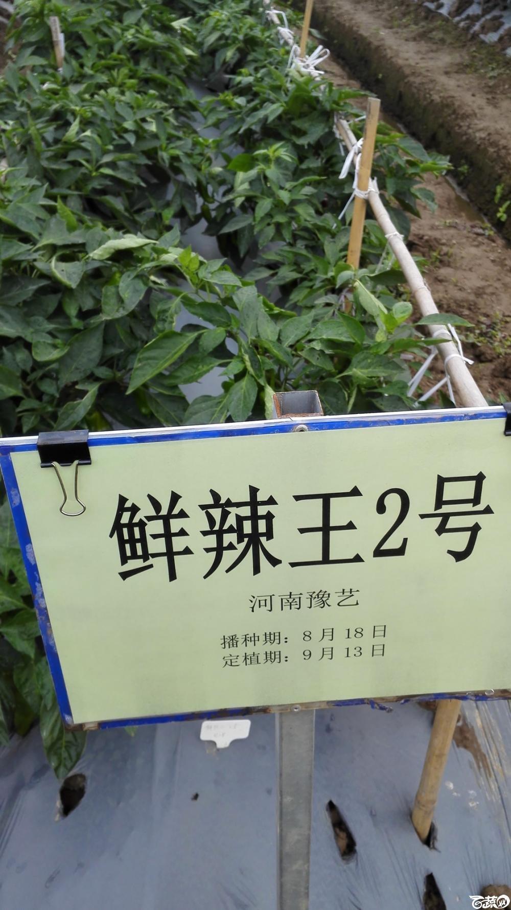 2014年12月8号中山蔬菜新品种展示会_辣椒_028.jpg