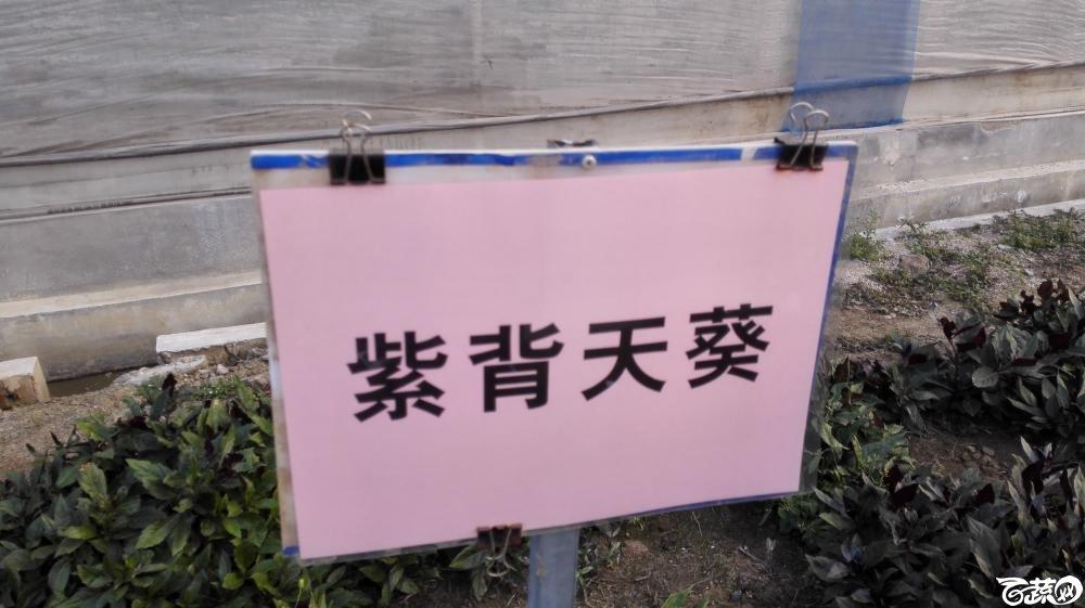 2014年12月8号中山蔬菜新品种展示会_叶菜_036.jpg