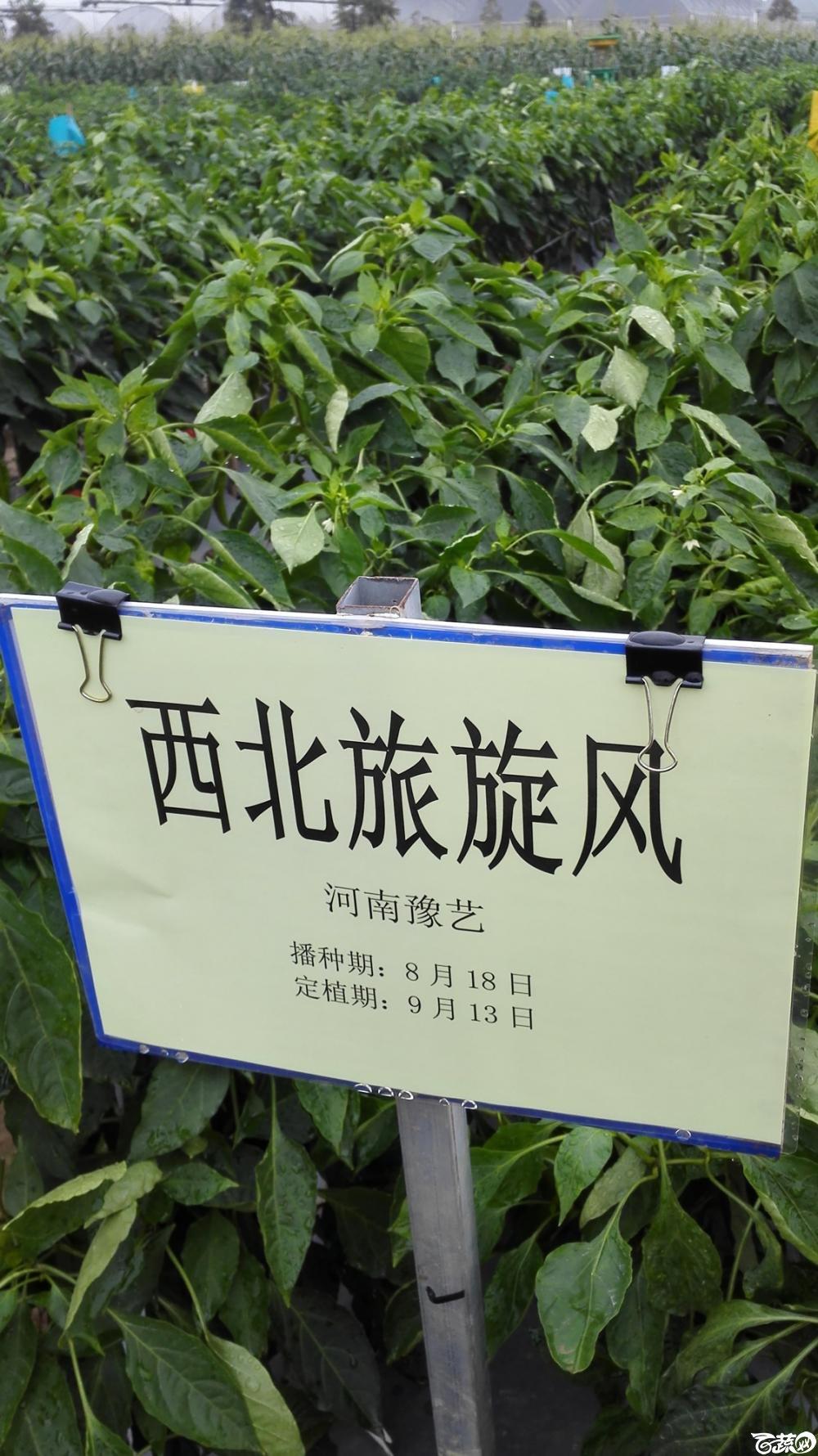 2014年12月8号中山蔬菜新品种展示会_辣椒_036.jpg