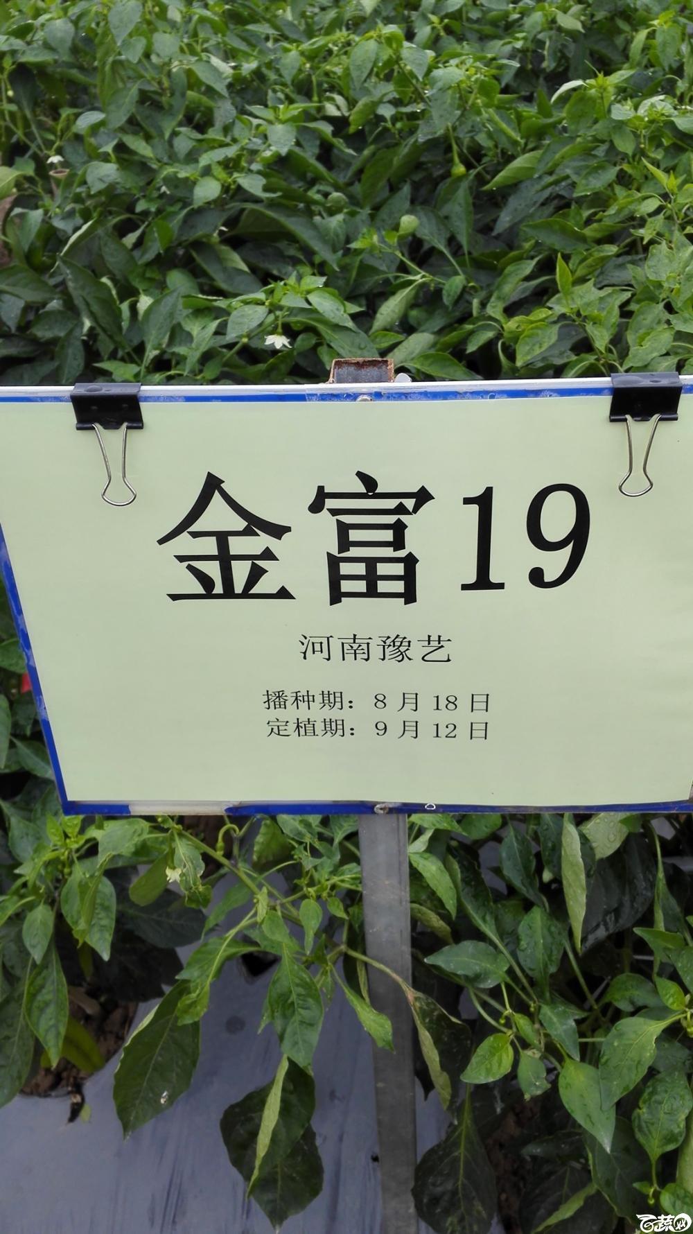 2014年12月8号中山蔬菜新品种展示会_辣椒_041.jpg