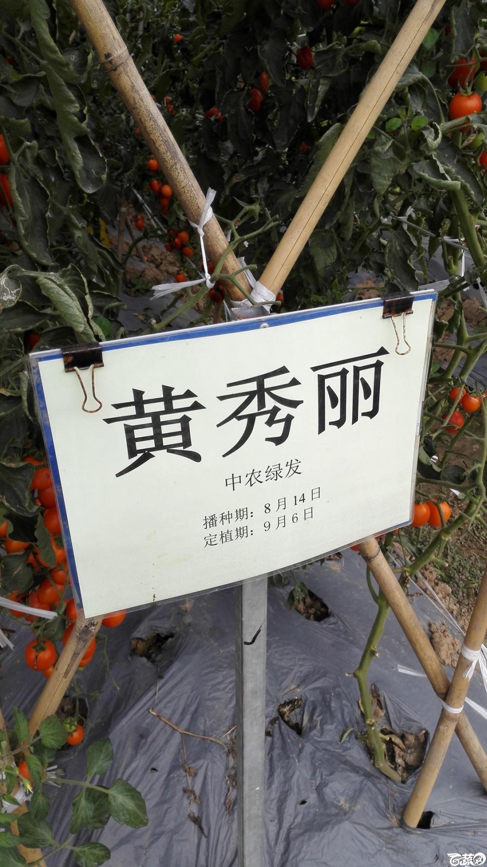 2014年12月8号中山蔬菜新品种展示会_番茄_068.jpg
