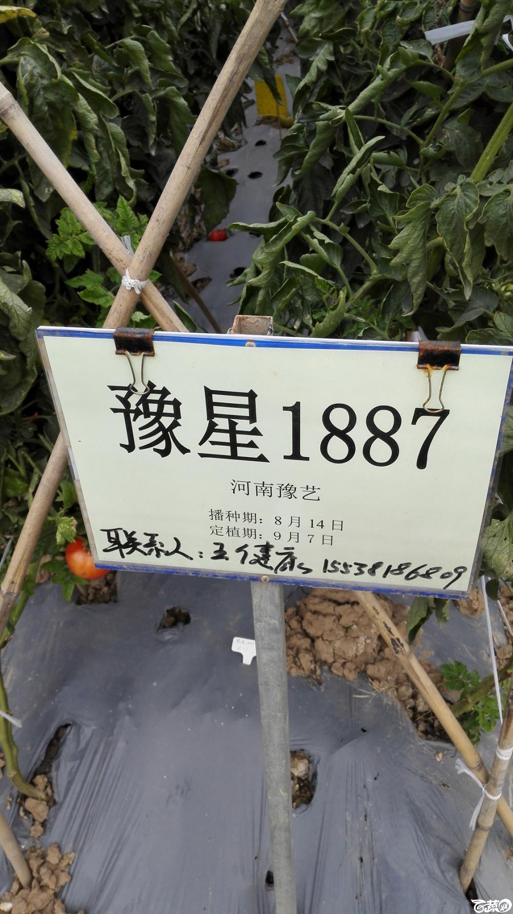 2014年12月8号中山蔬菜新品种展示会_番茄_081.jpg