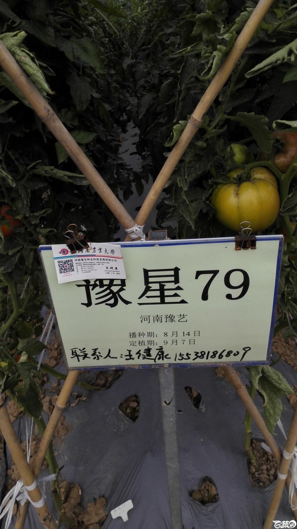 2014年12月8号中山蔬菜新品种展示会_番茄_086.jpg