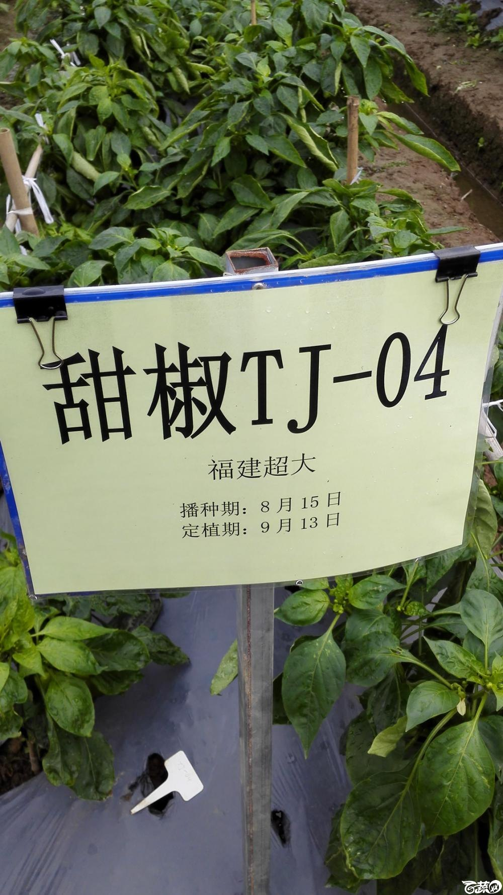 2014年12月8号中山蔬菜新品种展示会_辣椒_146.jpg