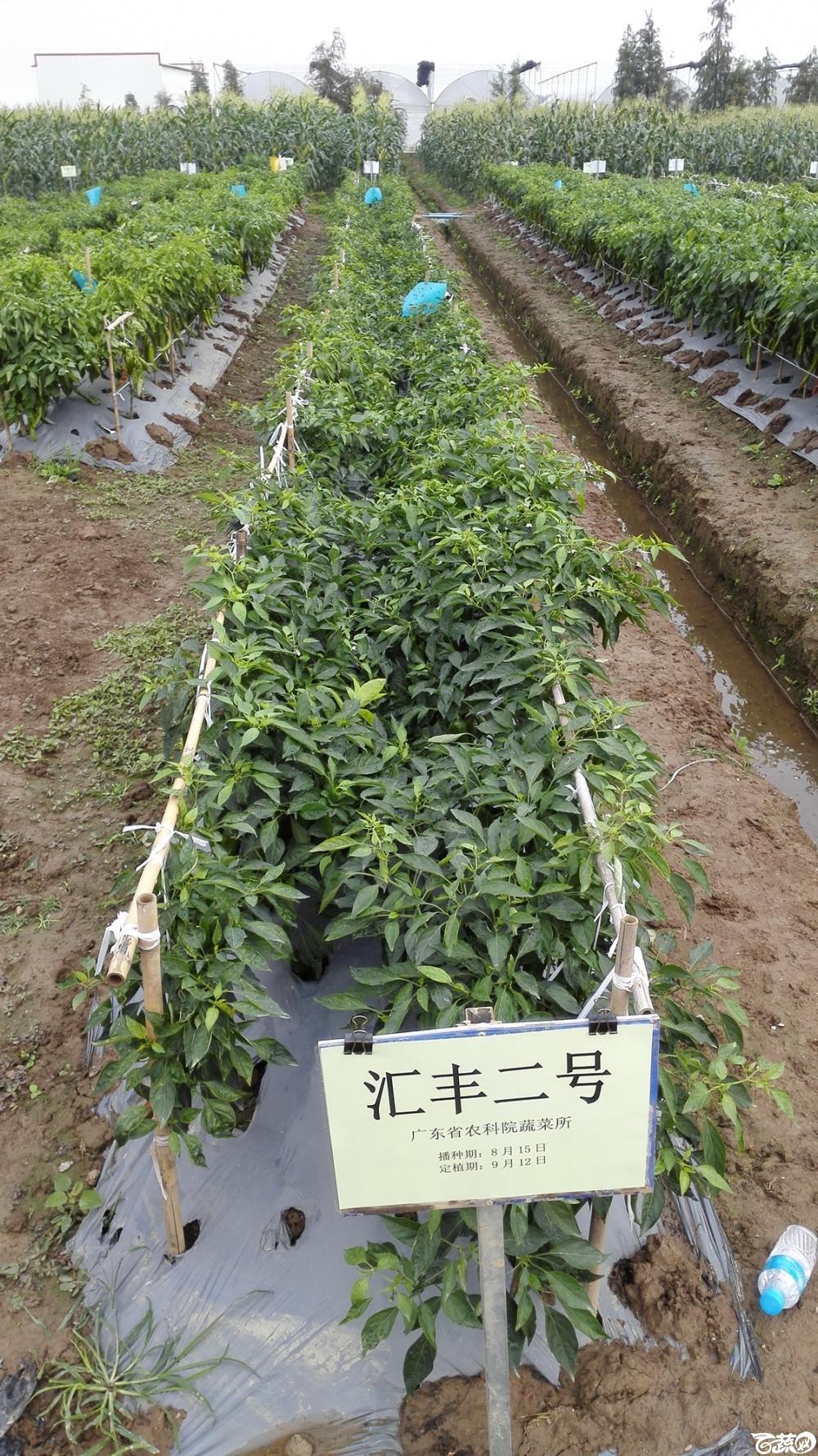 2014年12月8号中山蔬菜新品种展示会_甜玉米_211.jpg