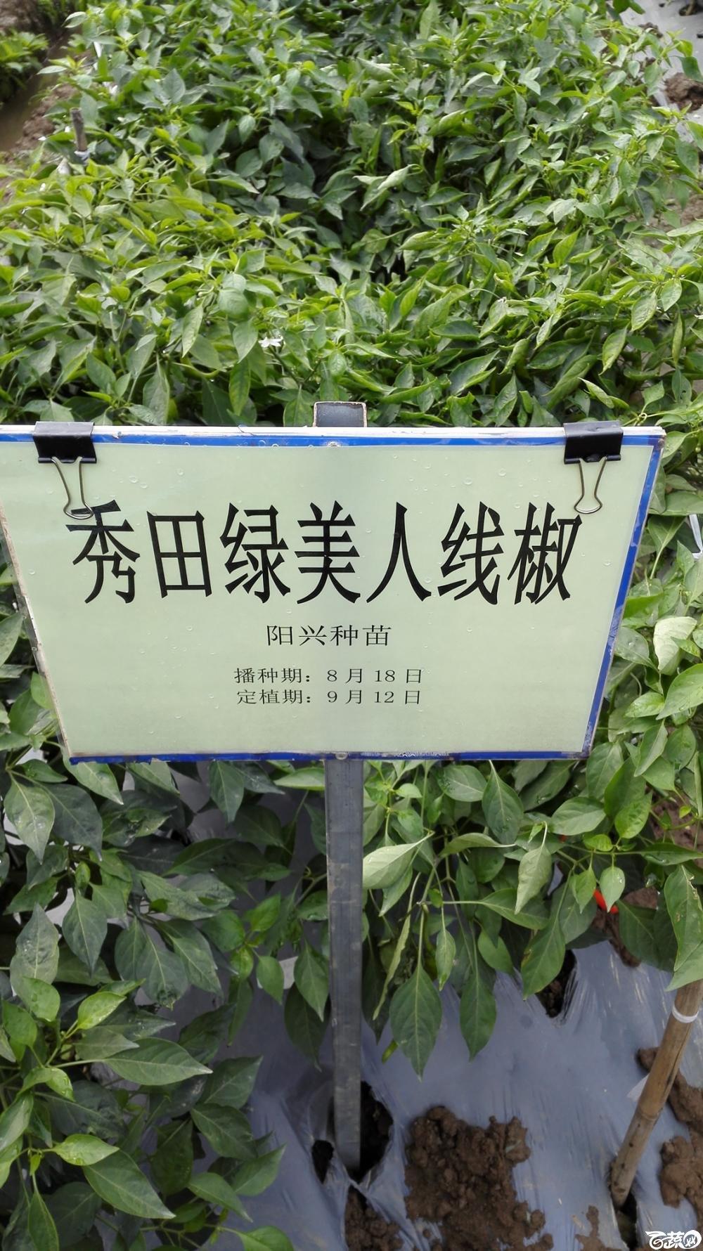 2014年12月8号中山蔬菜新品种展示会_辣椒_253.jpg