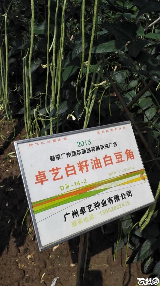 2015年春季广州蔬菜新品种展示推广会-卓艺白籽油白豆角-002.jpg