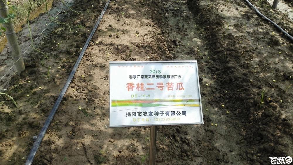 2015年春季广州蔬菜新品种展示推广会-揭研香桂二号苦瓜-004.jpg