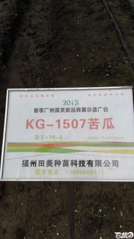 2015年春季广州蔬菜新品种展示推广会-福建田美KG-1507苦瓜-005.jpg