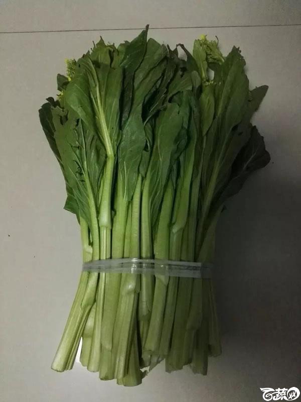 台湾杂交甜菜心 007.jpg