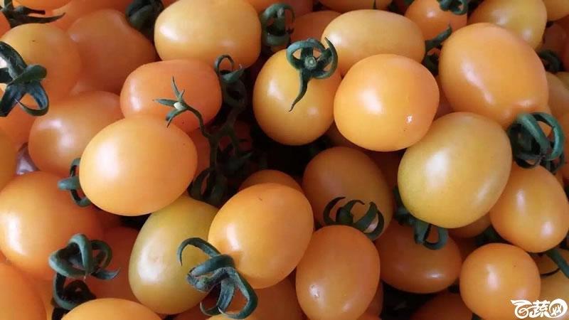 小番茄 003.jpg