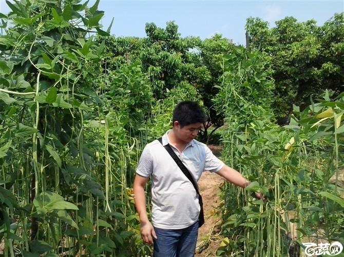 2012年十月条条金白籽油白豆角基地实景 条条金_18.jpg