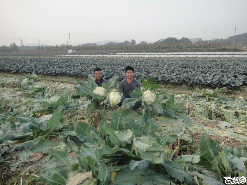 2013年12月18日松花王 DSC02369_26.jpg