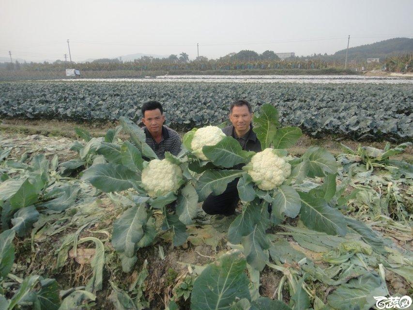 2013年12月18日松花王 DSC02371_28.jpg