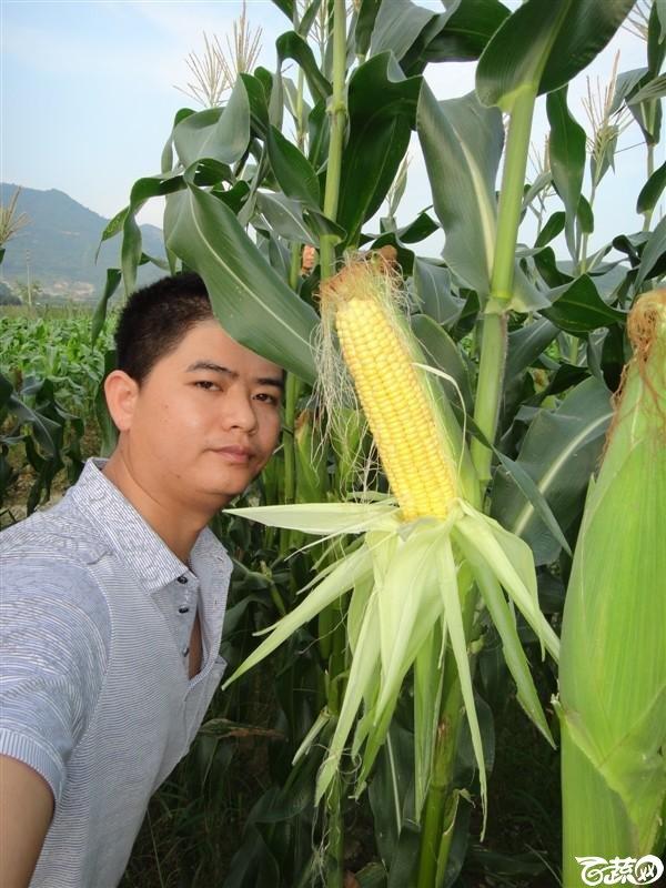 甜玉米-2012年五月田间品种 五月田间品种_62.jpg