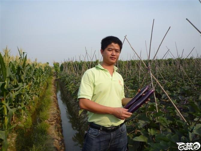 完美茄子抗病第一耐热第一产量第一 2011年4月26日完美茄子_11.jpg