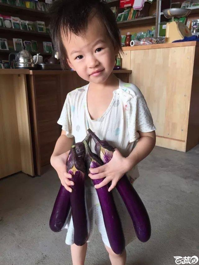紫红长茄 2015-08-29_179.jpg
