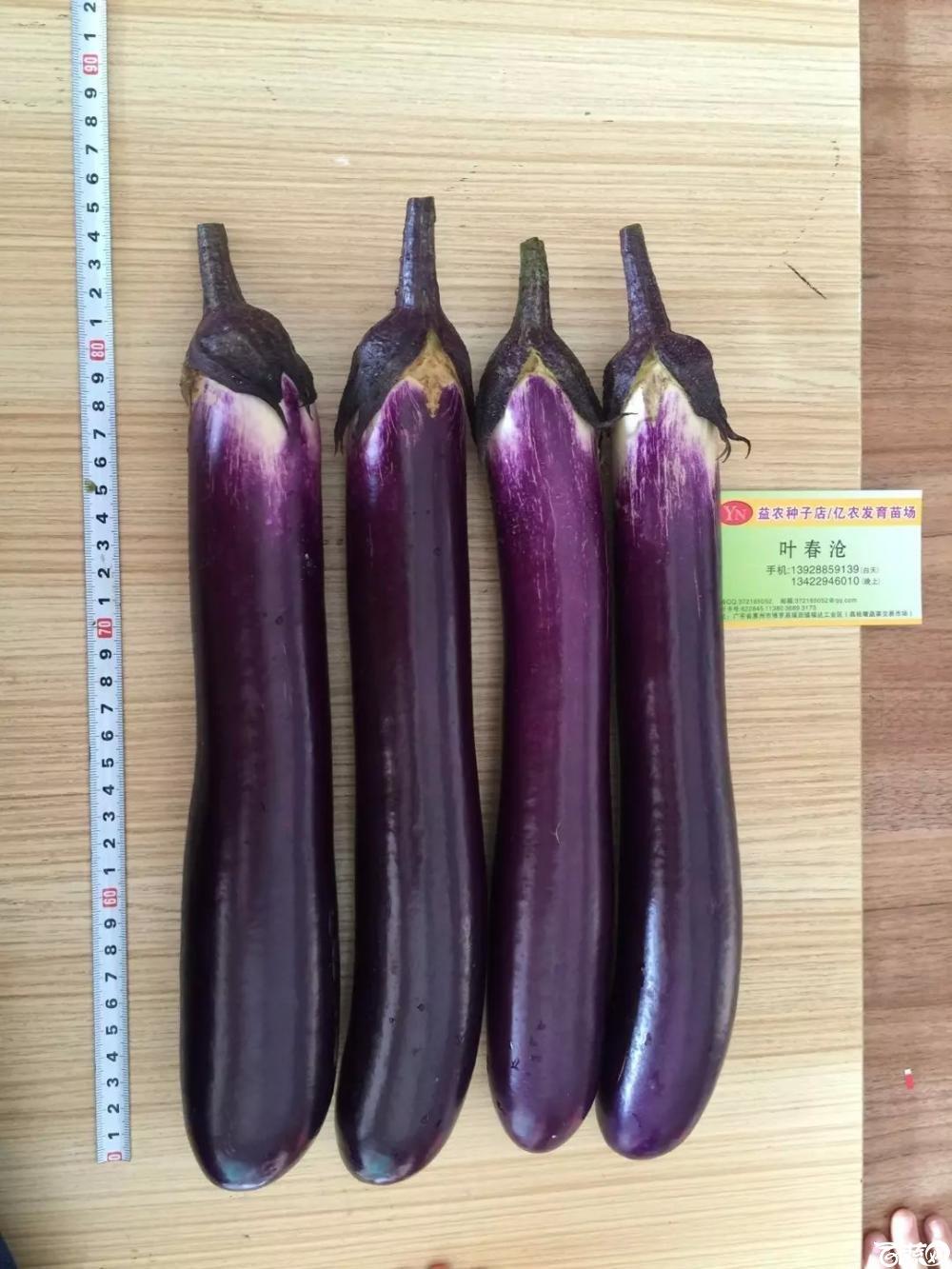 紫红长茄 2015-10-25_145.jpg