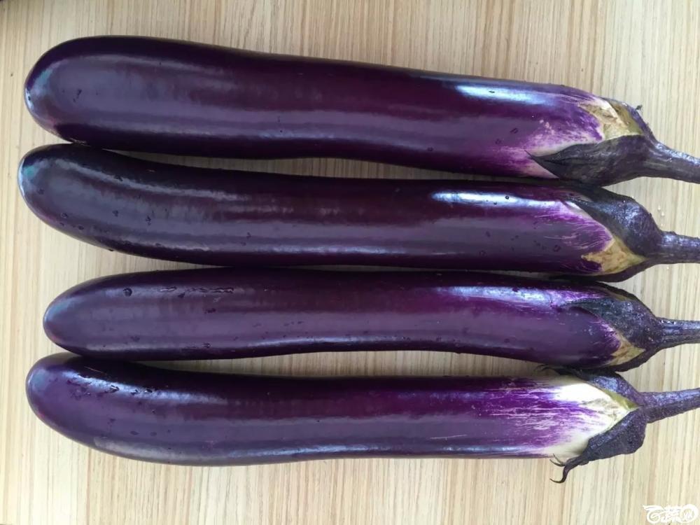 紫红长茄 2015-10-25_146.jpg