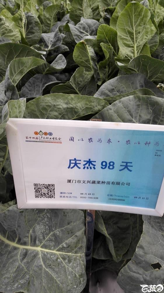 2015年双12广东种业博览会全国优良蔬菜品种田间表现-厦门文兴种苗庆杰98天花椰菜-001.jpg