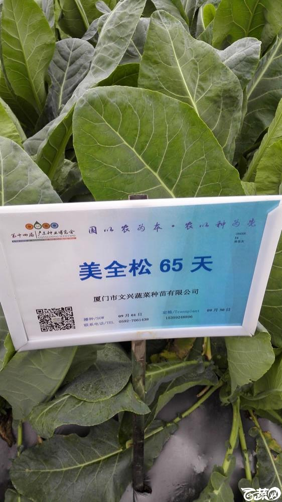 2015年双12广东种业博览会全国优良蔬菜品种田间表现-厦门文兴种苗美全松65天花椰菜-001.jpg