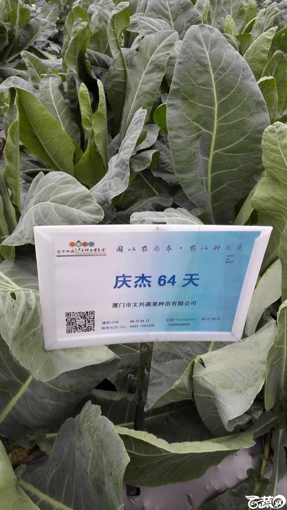 2015年双12广东种业博览会全国优良蔬菜品种田间表现-厦门文兴种苗庆杰64天花椰菜-001.jpg