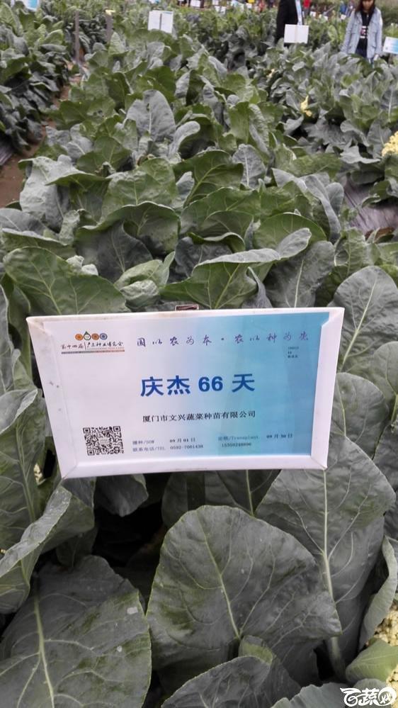 2015年双12广东种业博览会全国优良蔬菜品种田间表现-厦门文兴种苗庆杰66天花椰菜-001.jpg