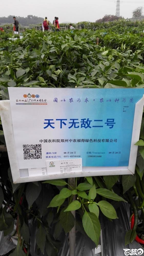 2015年双12广东种业博览会全国优良蔬菜品种田间表现-中国中农福得绿色科技天下无敌二号线椒-001.jpg