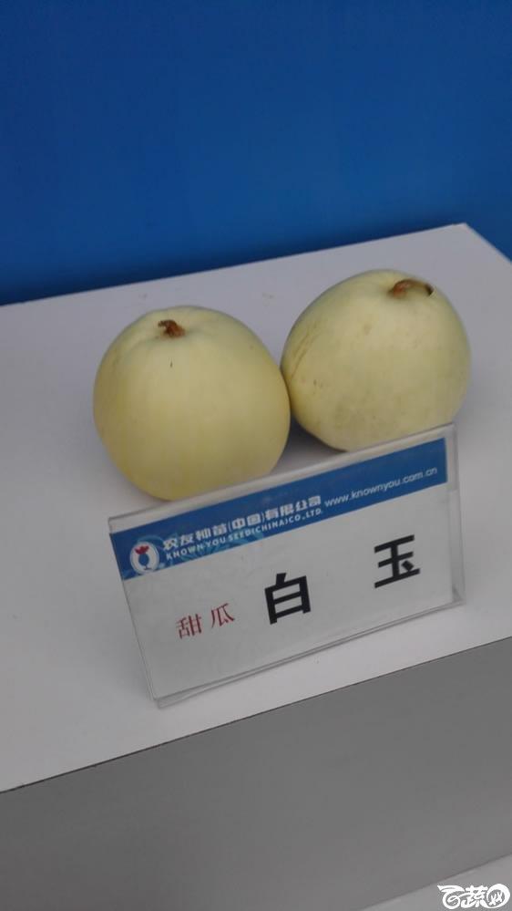 2015年双12广东种业博览会全国优良蔬菜品种田间表现-台湾农友种苗白玉甜瓜.jpg
