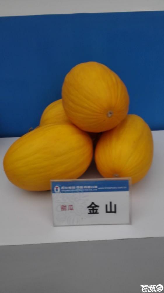 2015年双12广东种业博览会全国优良蔬菜品种田间表现-台湾农友种苗金山甜瓜.jpg
