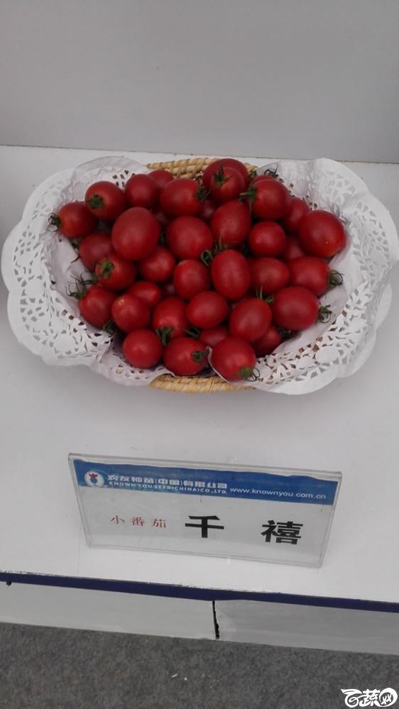 2015年双12广东种业博览会全国优良蔬菜品种田间表现-台湾农友种苗千禧小番茄.jpg