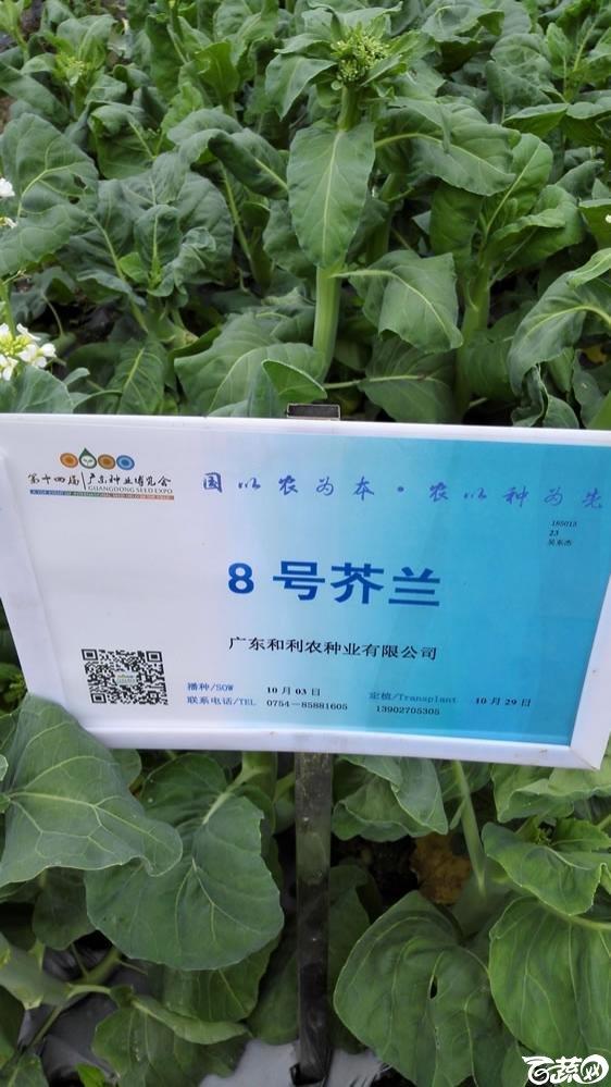 2015年双12广东种业博览会全国优良蔬菜品种田间表现-广东和利农种业8号芥兰(蓝)-001.jpg