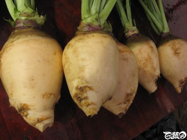 蛋白菜5.jpg