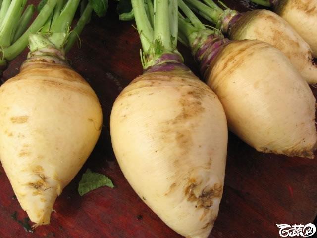 蛋白菜6.jpg