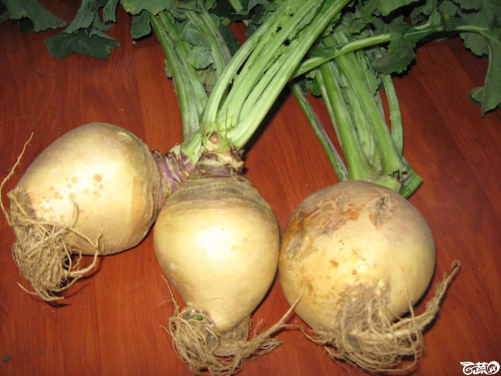 蛋白菜7.jpg