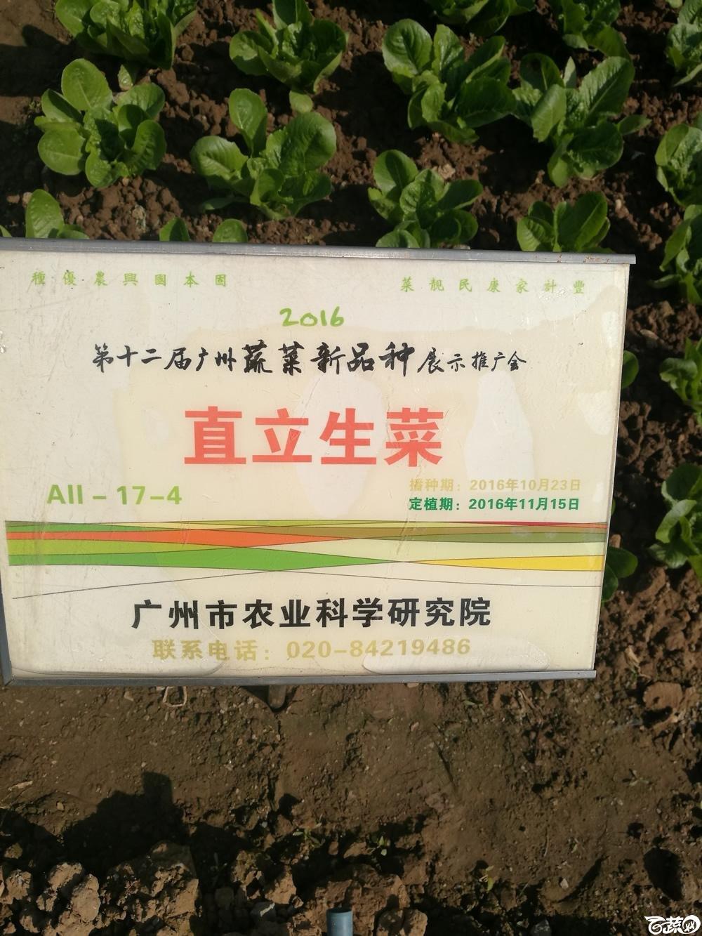 2016年12届广州蔬菜新品种展示会,广州市农科院直立生菜_001.jpg