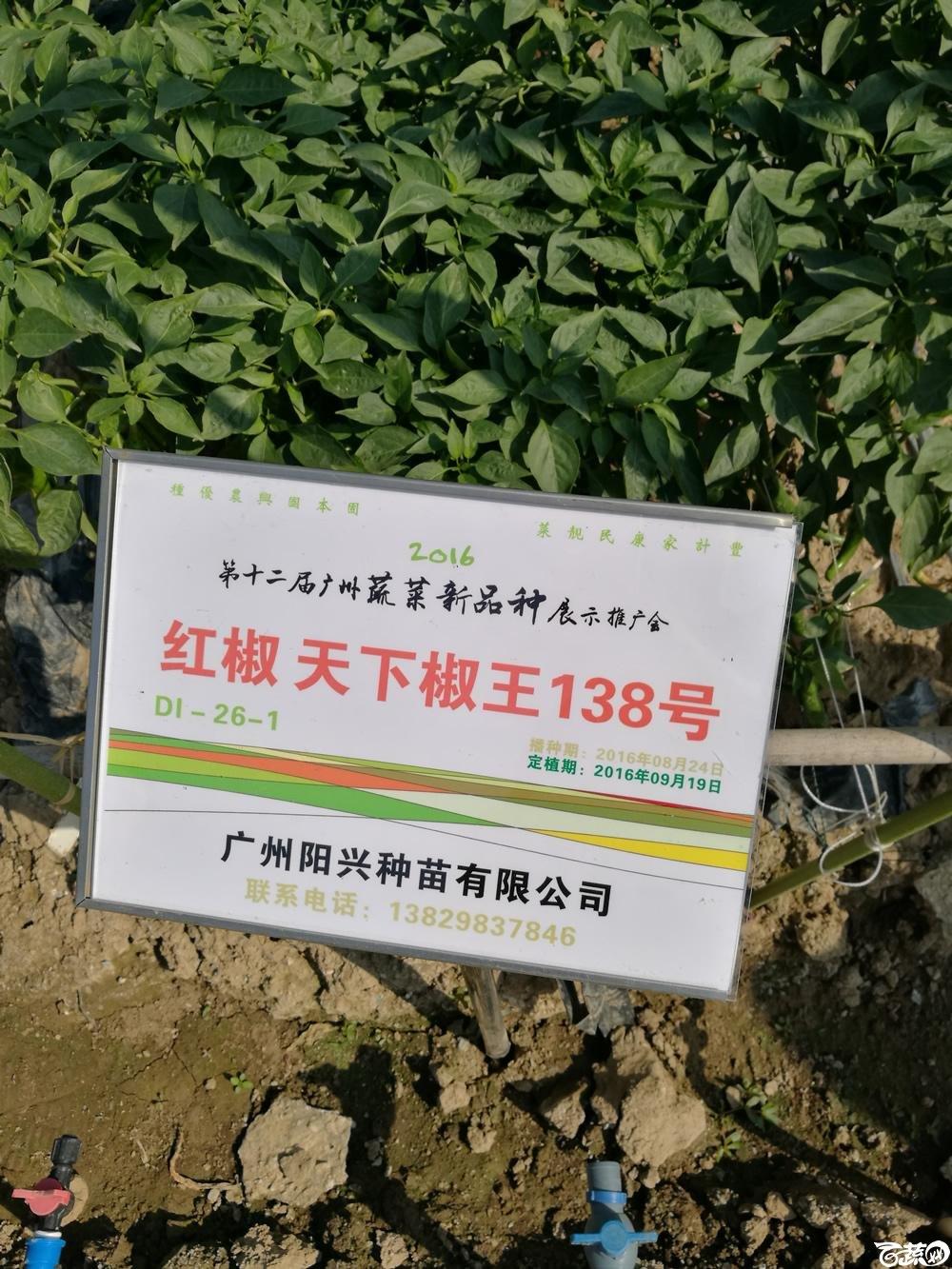 2016年12届广州蔬菜新品种展示会,广州阳兴种苗公司天下椒王138_001.jpg