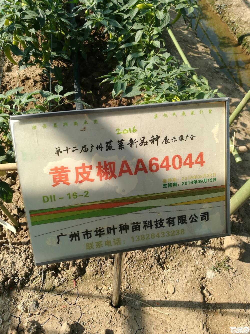 2016年12届广州蔬菜新品种展示会,广州华叶种苗黄皮椒AA64044_001.jpg