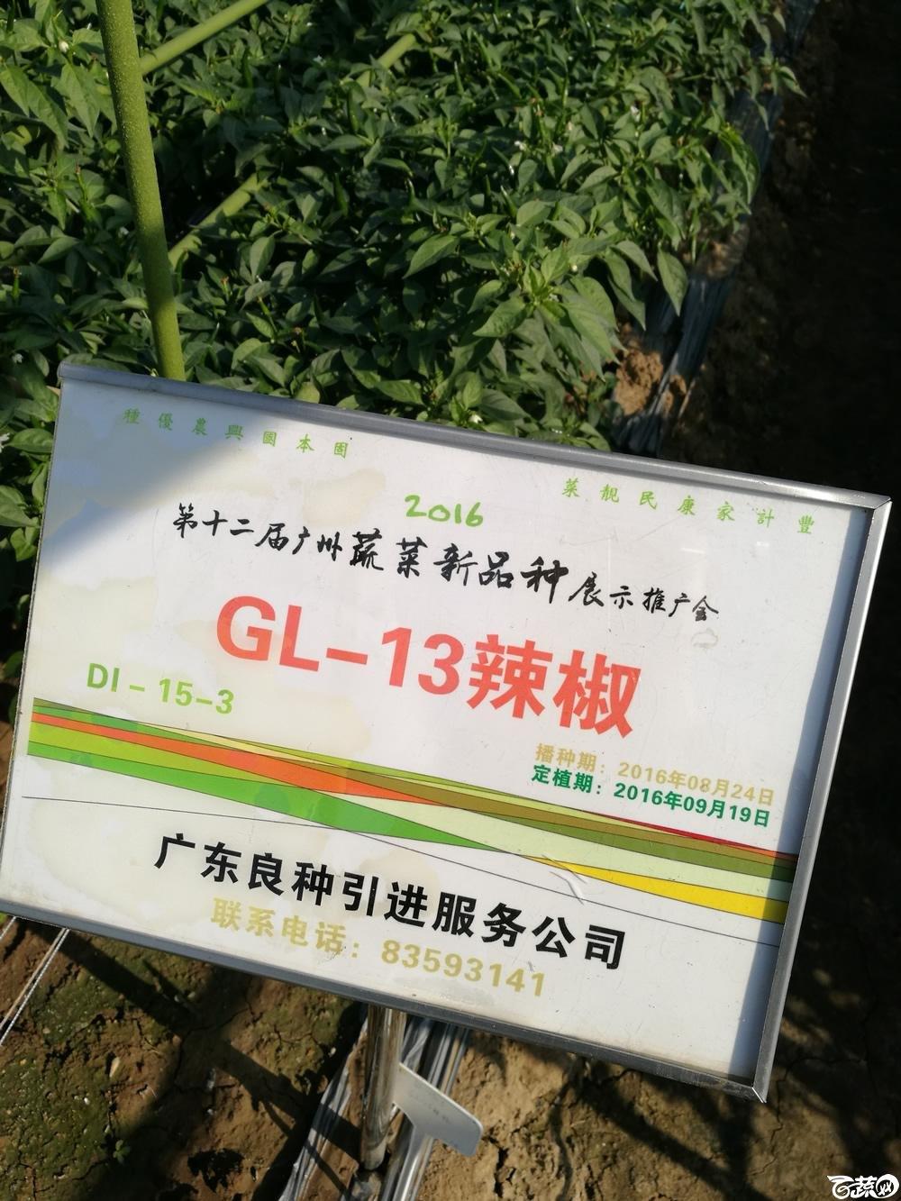 2016年12届广州蔬菜新品种展示会,广东良种引进公司GL-13辣椒-001.jpg