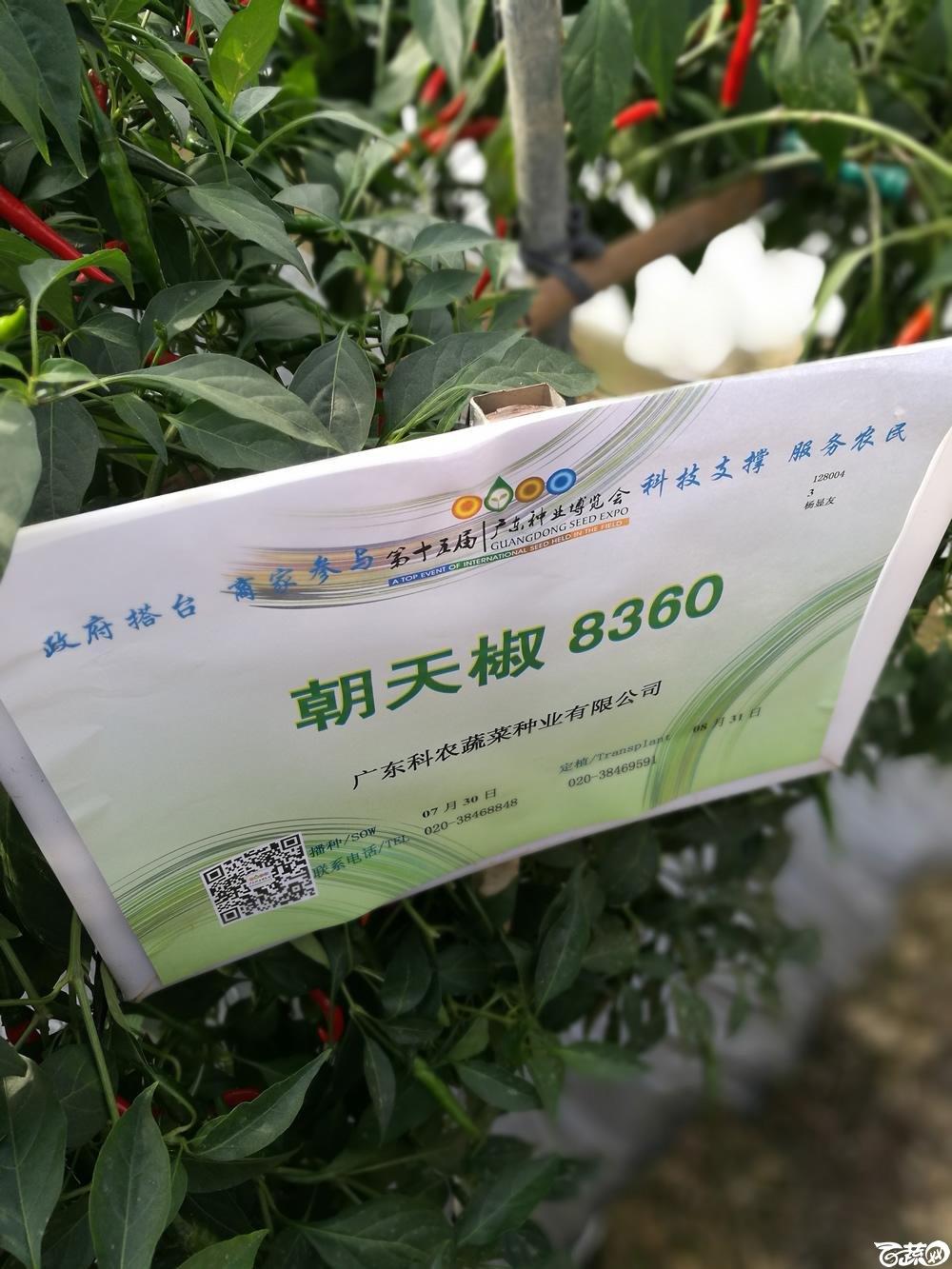 2016年15届广东种博会,广东科农种业朝天椒8360_001.jpg