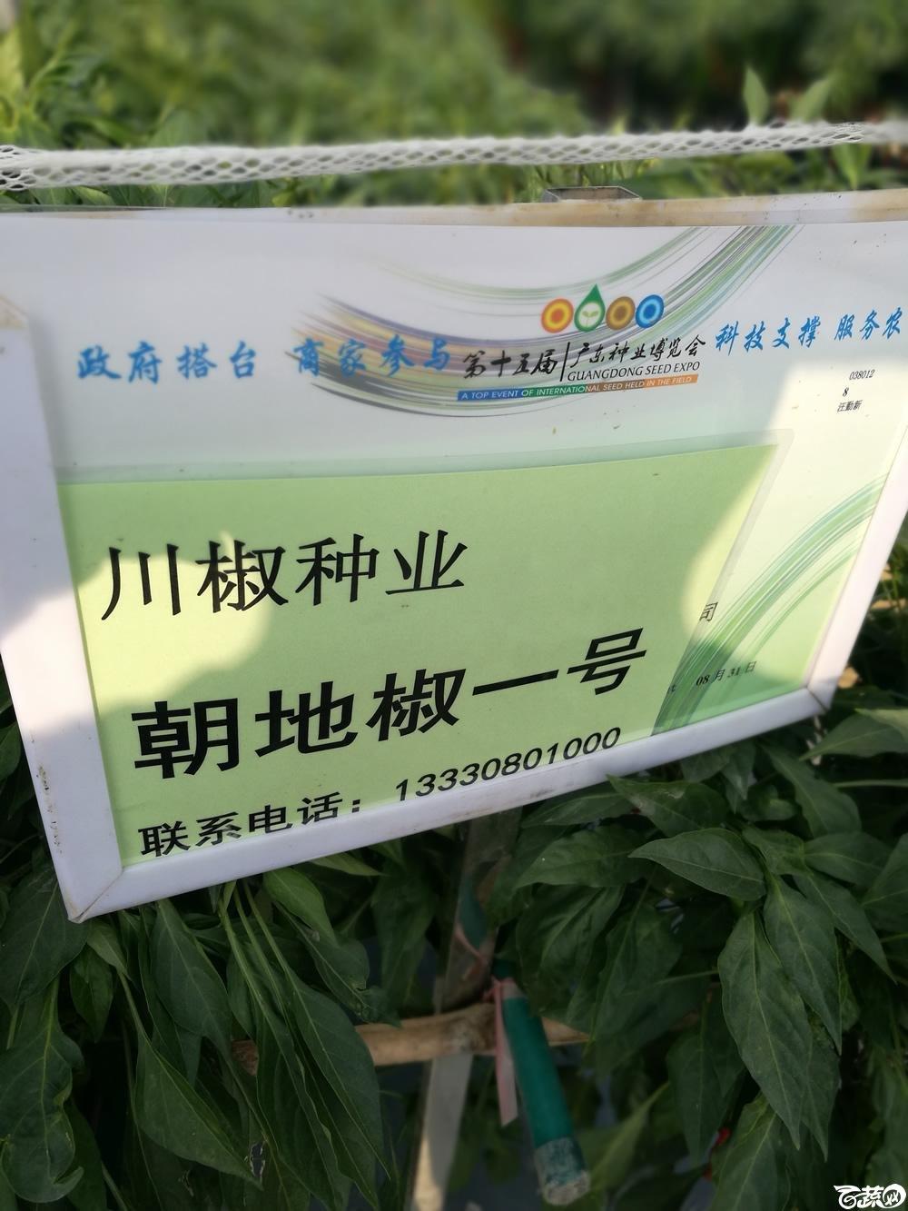 2016年15届广东种博会,四川川椒种苗公司朝地椒1号_001.jpg