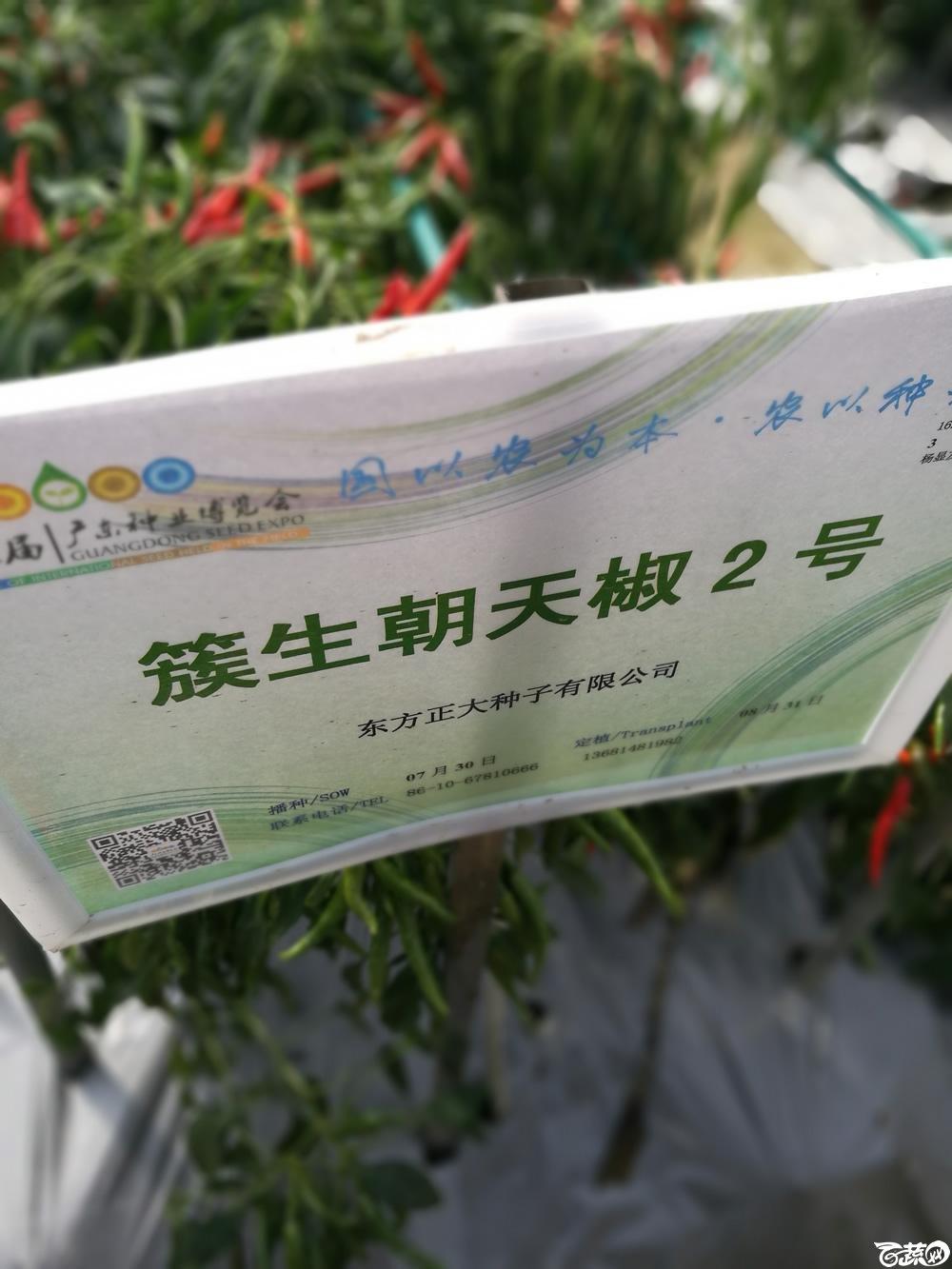 2016年15届广东种博会,东方正大公司簇生朝天椒2号_001.jpg