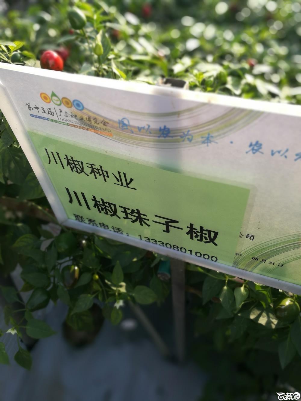 2016年15届广东种博会,四川川椒种苗公司珠子椒_001.jpg