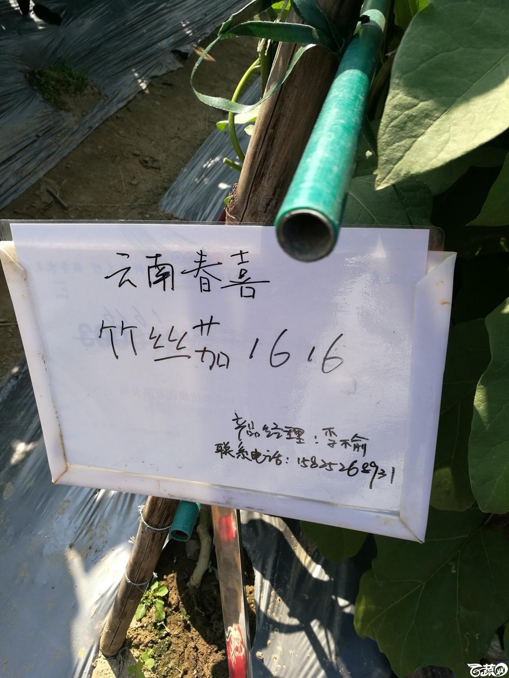 2016年15届广东种博会,云南春喜农业公司竹丝茄1616_001.jpg
