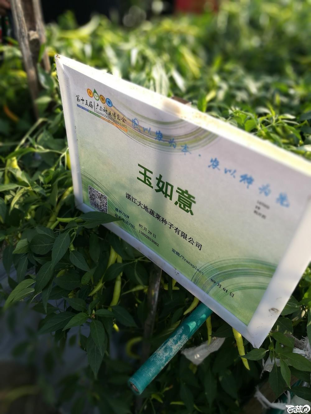 2016年15届广东种博会,湛江大地种业公司玉如意朝天椒_001.jpg