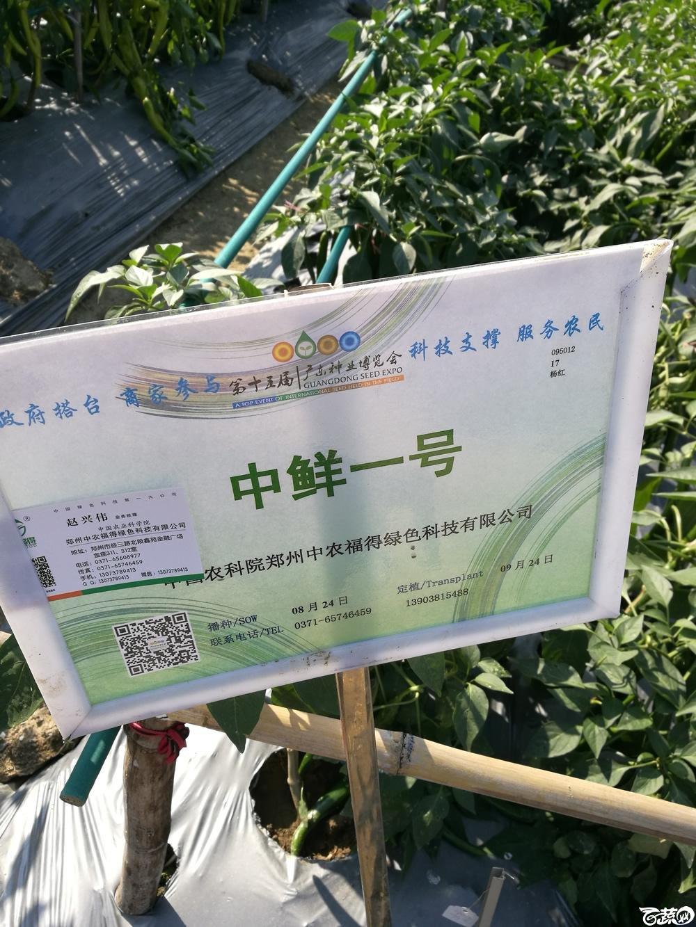 2016年15届广东种博会,郑州中农福得公司中鲜一号辣椒_001.jpg