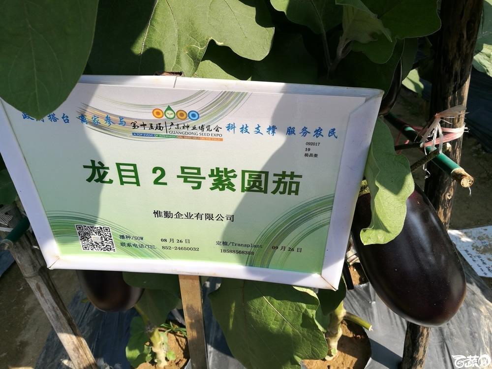 2016年15届广东种博会,香港惟勤种苗公司龙目二号紫圆茄_001.jpg